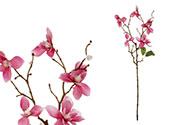 Magnolie, barva tm.růžová.