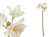 Amarylis, umělá květina, barva bílá  ojíněná