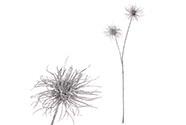 Česnek, umělá květina, barva stříbrná glitrovaná