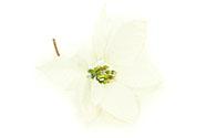 Květina umělá vazbová. Vánoční růže, poinsécie , barva bílá zasněžená
