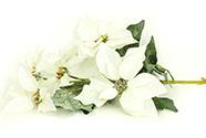 Květina umělá vazbová. Vánoční růže, poinsécie 5 květů ,barva bílá zasněžená