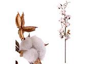 Větvička bavlníku, umělá dekorace