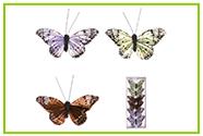 Motýli a ptáčci
